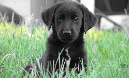 best time to get a puppy tip of the day when is the best time to get a