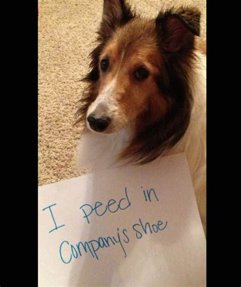 dog pees all over house naughty dog pees in company s shoes the naughtiest pets caught in the act pictures