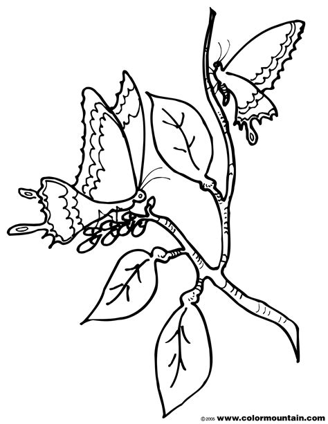 butterfly chrysalis coloring pages free coloring pages of butterfly cocoon