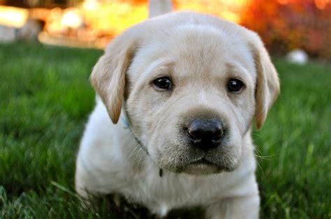 what causes spots on dogs what causes spots on dogs petful