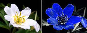 Hue Light Strips A Bees Eye View How Insects See Flowers Superbalanced