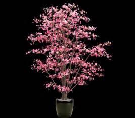 Maserati Cherry Blossoms Cherry Blossom Silk Flowers Cars