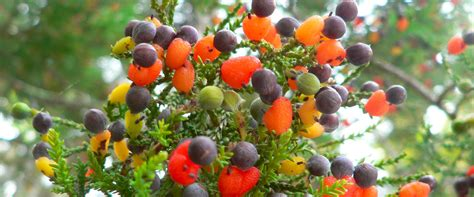 fruit of the tree the tree of 40 fruits in united states daily pakistan