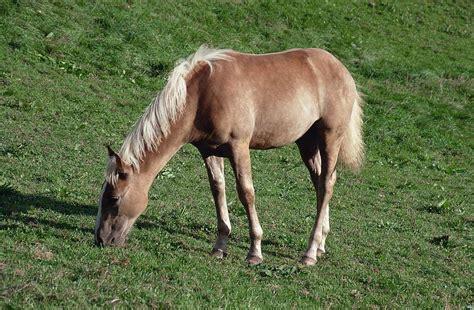 gambar gambar gambar haiwan related keywords gambar haiwan long tail