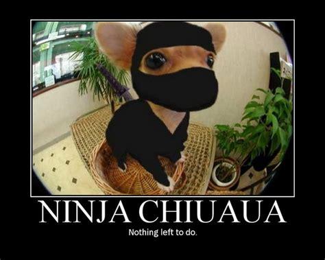 animal kaiser ninja animals