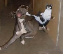Blind Kung Fu Master Alface Com Caf 201 Os Maiores Sonhos E Vontades De Um Gato