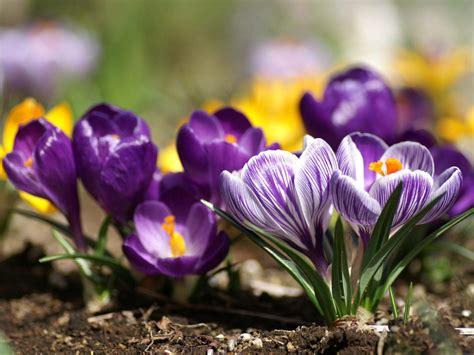 photos of spring flowers botanical illustration spring flowers