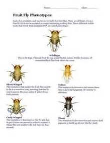 welke oorzaken fruitvliegen vragen en antwoorden