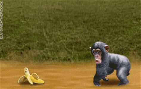 cara membuat gambar bergerak dengan format gif kumpulan animasi monyet bergerak lucu animasi dan gambar