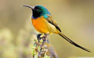 colorful birds wallpapers first hd wallpapers