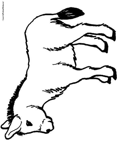 mexican donkey coloring page mexican baby ride donkey coloring pages how to draw