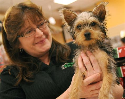 smith mall puppy store pinched pooch found wandering petco returned to palmer park mall pet shop