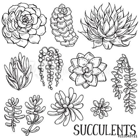 succulent  floral background  royalty