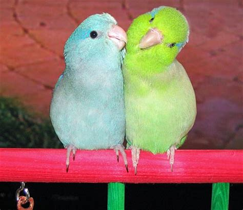 let s learn about unique birds letã s learn about animals books image gallery names of parrots