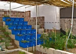 Backyard Aquaponics Greenhouse by Diy Aquaponics Fish Bowl Duckweed For Fish Food