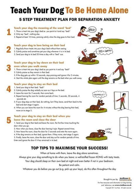 goldendoodle puppy feeding schedule best 25 puppy schedule ideas on goldendoodle