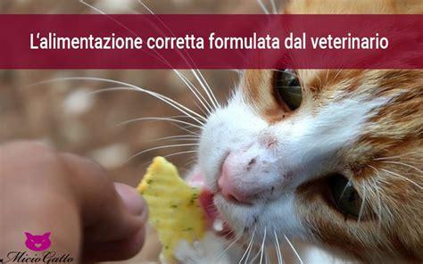 alimentazione casalinga anziano alimentazione corretta gatto corretta alimentazione