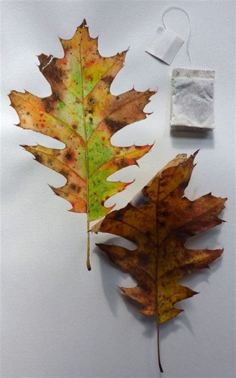 watercolor leaves tutorial pinterest the world s catalog of ideas