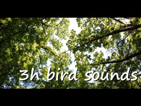 3 hours of relaxing morning bird song nature sounds