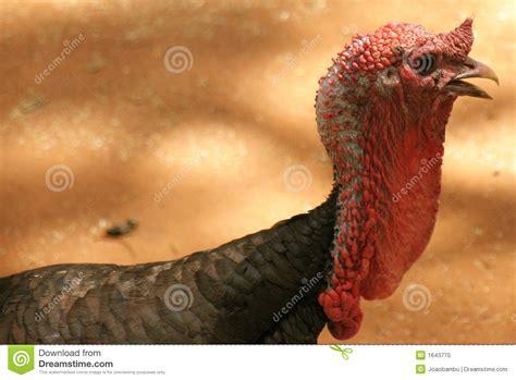 pics of a turkey neck i think someone is upset tinder