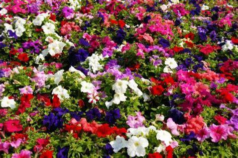 imagenes jardines de verano flores de verano canalhogar