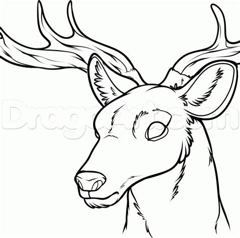 Tete De Cerf 1005 by The Gallery For Gt Deer Drawing