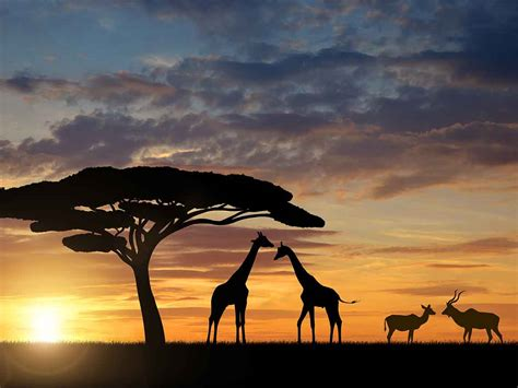 sudafrica imagenes viajar a sud 225 frica desde m 233 xico con mundo joven d 243 nde ir