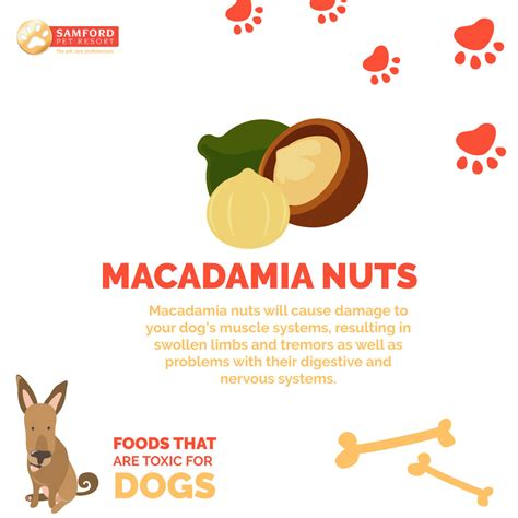 nuts for dogs 7 foods that are toxic for dogs samford pet resort