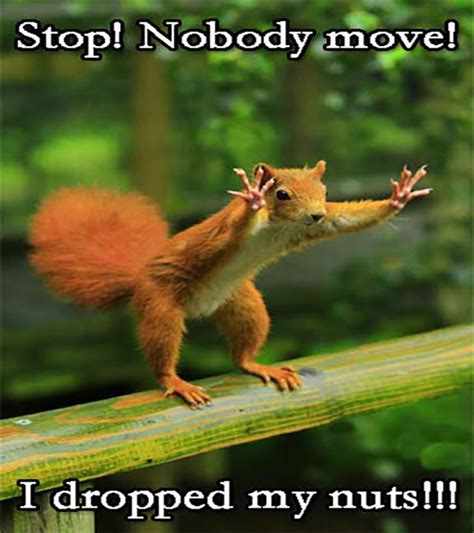 pictures with captions squirrels with caption 20 funnypica