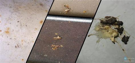Vogelkot Lackschaden Polieren by Vogelkot Archive Mission Hochglanz