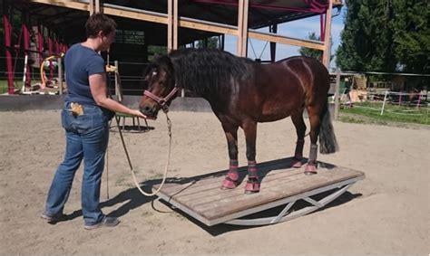 pferd eindecken ab wann tipih