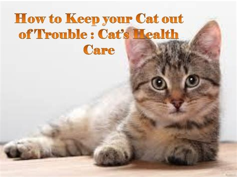 how to keep your cat out of trouble