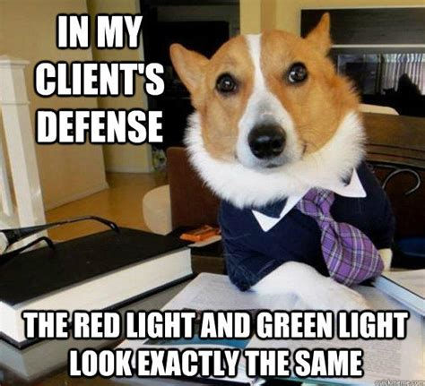 Dog Lawyer Meme - in my client s defense the red light and green light look