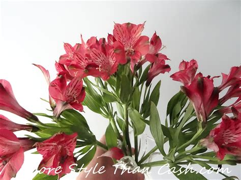 longest lasting inexpensive cut flowers