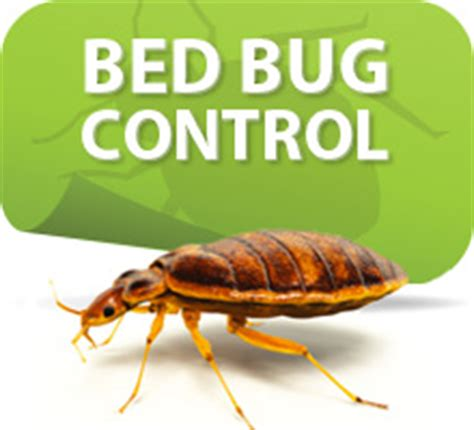 bed bug exterminator chicago a complete pest solution let s examine bed bugs in