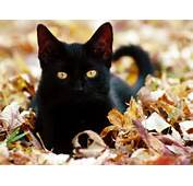 Cute Black Cat Pictures  Wallpapers Points