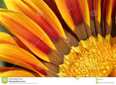 di fiore fotografo fiore fotografia stock immagine 886012