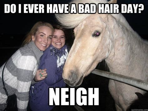 Nice Hair Meme - 30 funny animal captions part 7 30 pics amazing
