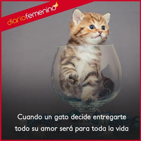 imagenes de para toda la vida amor frases para amar a los gatos amor para toda la vida