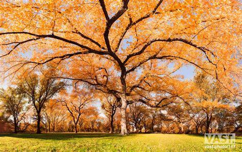nature fine art  high resolution large format