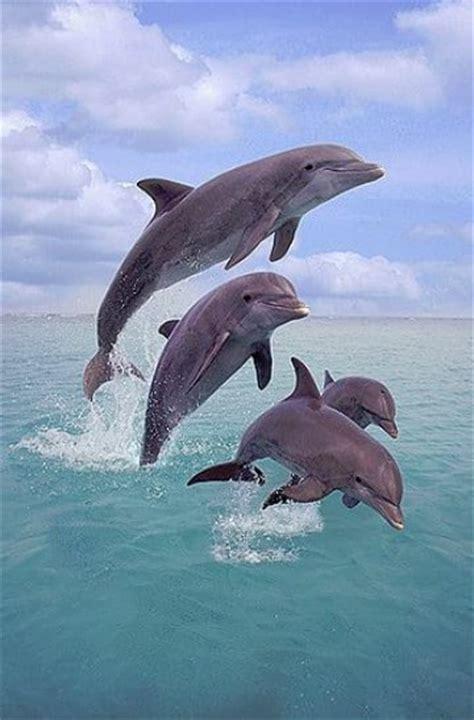 delfines amigos imagenes de delfines en el mar saltando imagenes delfines delfines en el mar