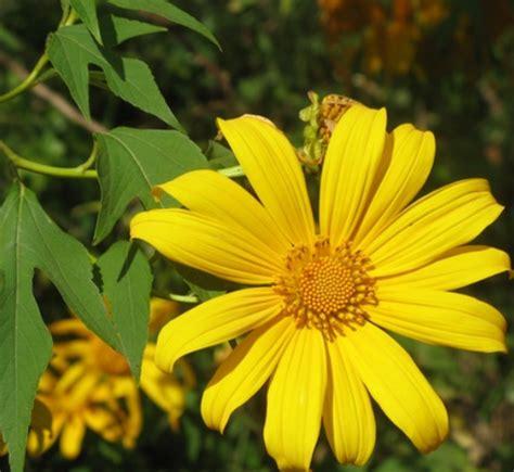 jenis jenis tanaman apotik hidup konsep pekarangan rumah
