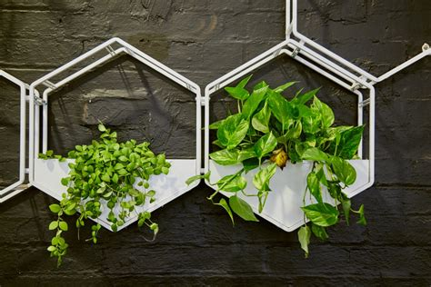 How To Make A Wall Planter by Wabe Wall Planter Oblica Melbourne Modern Designer