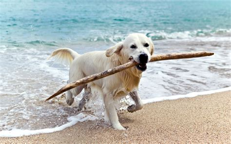 dog friendly beach house rentals top 10 pet friendly vacation rental destinations tripping com