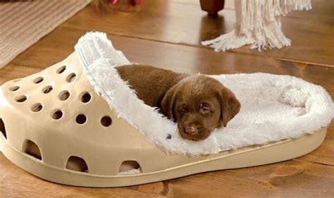 cucce da interno cucce per cani da interno e lettini su soul