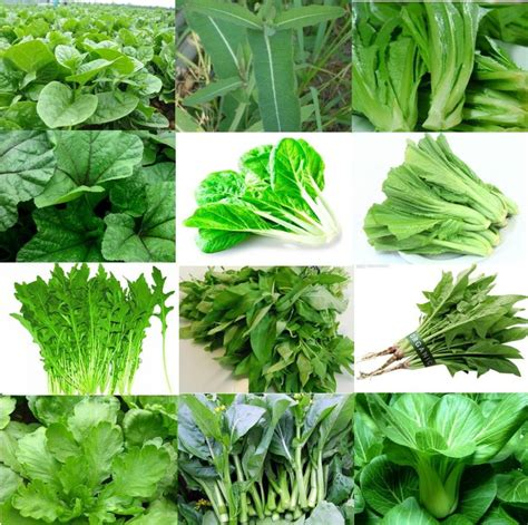 different type of leafy vegetable with name leafy spinach and its health benefits