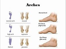 The Foot Chapter ppt video online download Foot Arch Muscles
