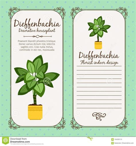 Vintage Label With Dieffenbachia Plant Stock Vector Illustration Of Beauty Cultural 104335113 Plant Label Template