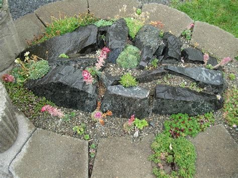 plants for rock gardens gardening know how
