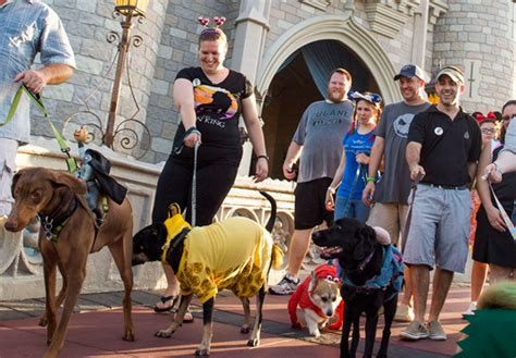 dogs at disney world d23 101 lucky dogs visit magic kingdom d23 presents parks